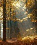 oak glade